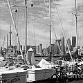 Sail Boats Toronto On by Bill Cobb
