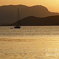 Sailboat At Sunset by Sophie Vigneault