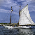 Sailboat In Cape May Channel by Nick Zelinsky