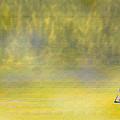 Sailboat On A Yellow Sea by Ian  MacDonald