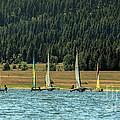 Sailboat Regatta Cascade Lake by Robert Bales