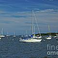 Sailboats by Amazing Jules