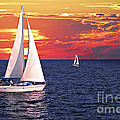 Sailboats At Sunset by Elena Elisseeva