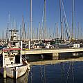 Sailboats In Badalona Marina by Kendal Brenneman