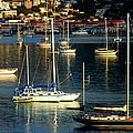 Sailboats Sunrise by Tim Nielsen