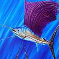 Sailfish by Steve Ozment