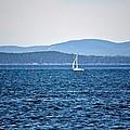 Sailing Amidst The Buoys by Tara Potts