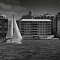 Sailing Away  by Mario Celzner