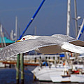 Sailing by HH Photography of Florida