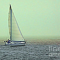 Sailing Home by Jayne Gohr