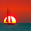 Sailing by Mitch Cat