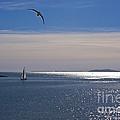 Sailing On Christmas Ventura Harbor by Ian Donley