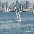 Sailing San Diego by Mary Brhel
