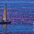 Sailing by Tommy Anderson