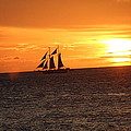 Sailors Delight by Christy Thompson