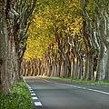 Saint Remy Trees by Brian Jannsen