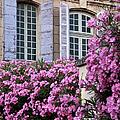 Saint Remy Windows by Brian Jannsen