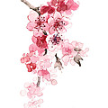 Sakura Flowers Watercolor Art Print Painting by Joanna Szmerdt
