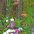 Sala Tree And Orchids At Buddhist University In Chiang Mai-thail by Ruth Hager