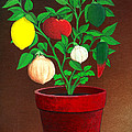 Salsa Plant by Snake Jagger