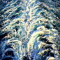 Salt Life by Karen Wiles