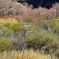 Salt River Spring by Lynda Lehmann
