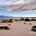 Salton Sea California by Linda Dunn