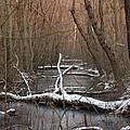 Salty Logs  by Bill Helman