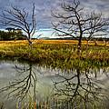 Salty Marsh At Jekyll Island by Debra and Dave Vanderlaan
