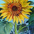 Salute The Sun by Susan Duda