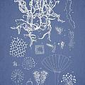 Salwater Algae by Aged Pixel