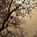 Saman In The Sky by Juan Carlos Lopez