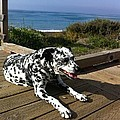 Samdog At The Beach by Mike  Scott