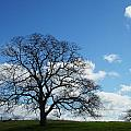 Same Tree Many Skies 11 by Robert Woodward