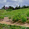 San Casciano In Val Di Pesa- Italy by Jennie Breeze