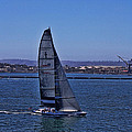 San Diego Harbor Sailing by Tommy Anderson