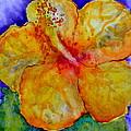 San Diego Hibiscus Study IIi Upward Facing  by Beverley Harper Tinsley