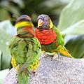 San Diego Zoo - 1212341 by DC Photographer