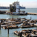 San Francisco Pier 39 Sea Lions 5d26102 by Wingsdomain Art and Photography