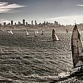 San Francisco Sails by Diana Powell