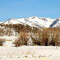 San Juan Mountains No. 1 by Annie Adkins