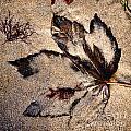 Sand Art by Susie Peek
