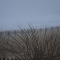 Sand Dune And Fenced Grasses by Robert Banach