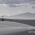 Sand Dunes Light And Shadow by Vivian Christopher