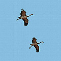 Sand Hill Cranes On Approach by Tom Janca