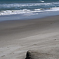 Sand Mogul On Florida Beach by Allan  Hughes