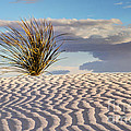 Sand Patterns And The Yucca by Vivian Christopher