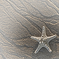 Sand Prints And Starfish II by Susan Candelario