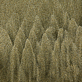 Sand Texture by Charmian Vistaunet