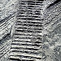 Sand Tracks by Joan Reese